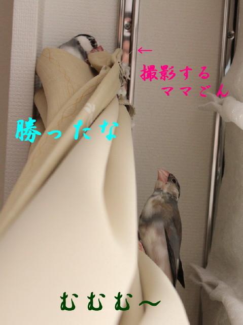 c0365734_20102194.jpg
