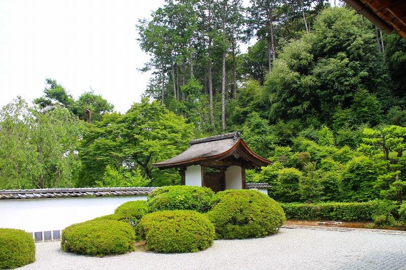知る人ぞ知る『正伝寺(西賀茂)の庭園』20150617_e0237645_17472224.jpg