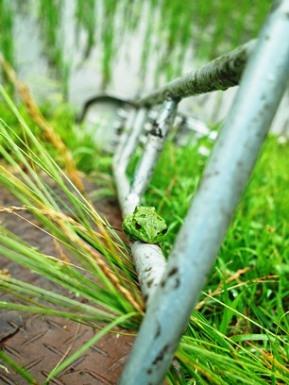 草取り、寒い夏、ホタル、出張・・・オクヤマの一日。_d0005250_16263511.jpg