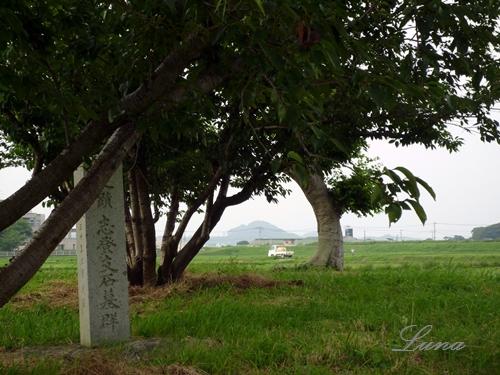 志登支石墓群・倭は朝鮮半島まであったみたいだけど_c0222861_22255545.jpg