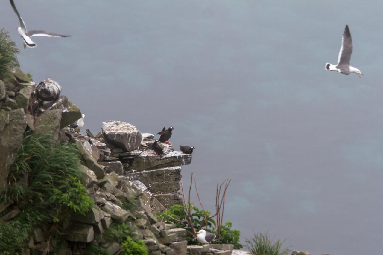 ケイマフリ  北海道旅行その7  赤岩展望台から_a0052080_22365902.jpg