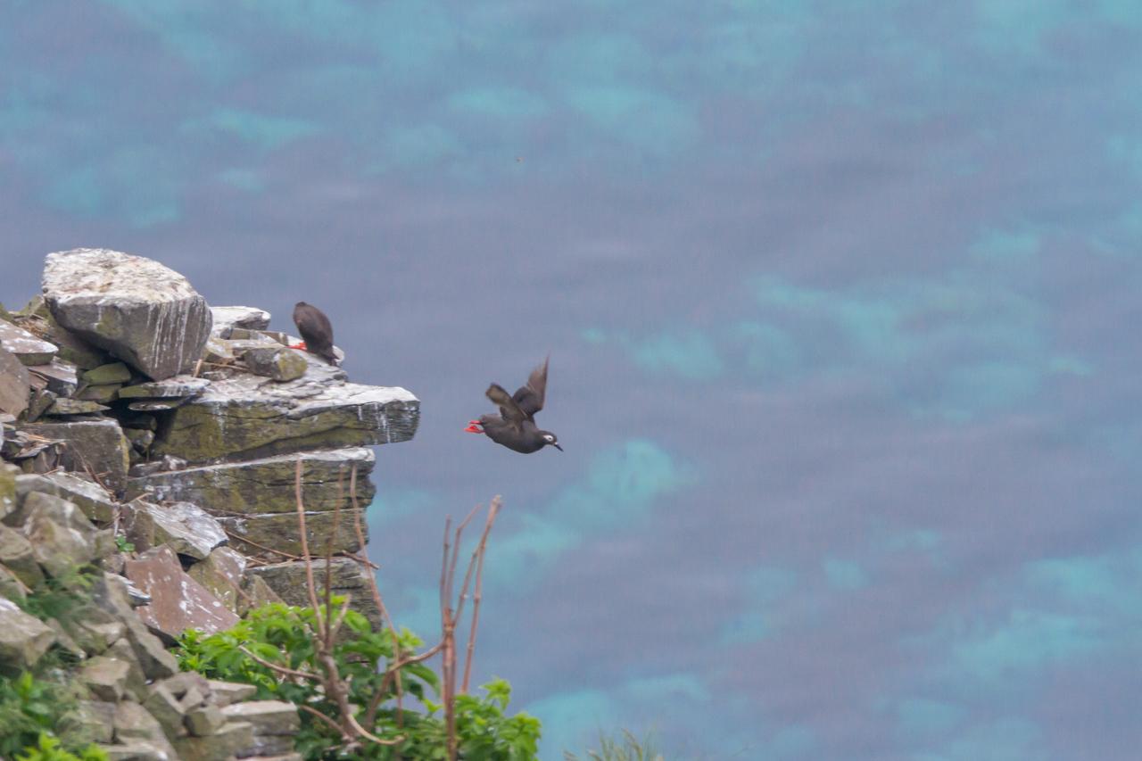 ケイマフリ  北海道旅行その7  赤岩展望台から_a0052080_22374521.jpg