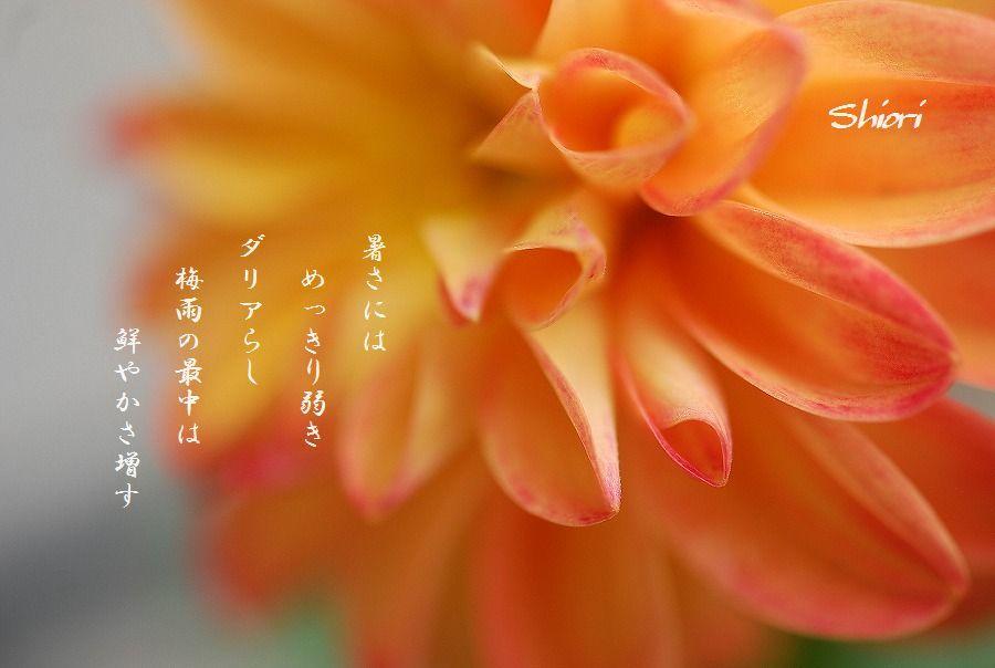 木槿の花他_c0187781_17203730.jpg