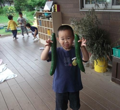 ついでの野菜収穫_f0334882_18261079.jpg