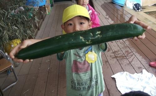 ついでの野菜収穫_f0334882_18305864.jpg