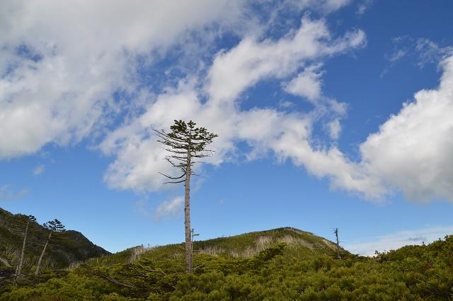 北八ヶ岳 坪庭、高山植物群_c0124100_23172758.jpg
