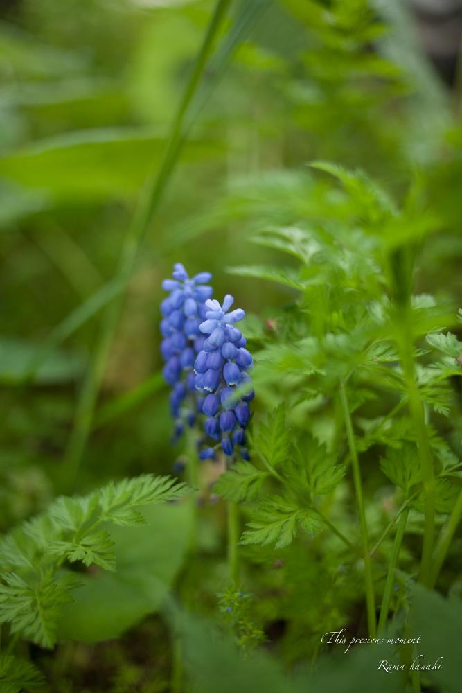 五月新緑輝く初夏到来_c0137403_11253031.jpg