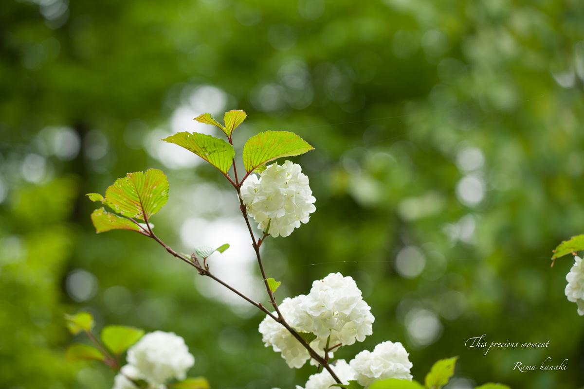 五月新緑輝く初夏到来_c0137403_11293953.jpg