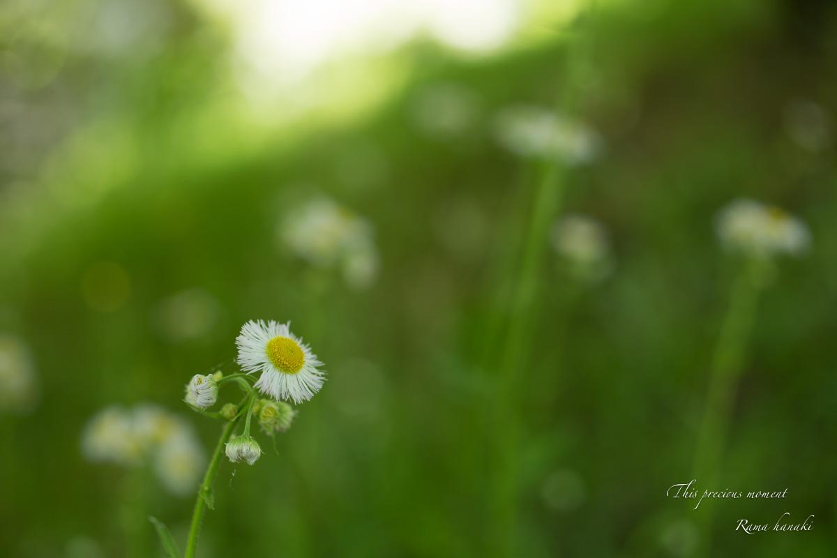 五月新緑輝く初夏到来_c0137403_120101.jpg