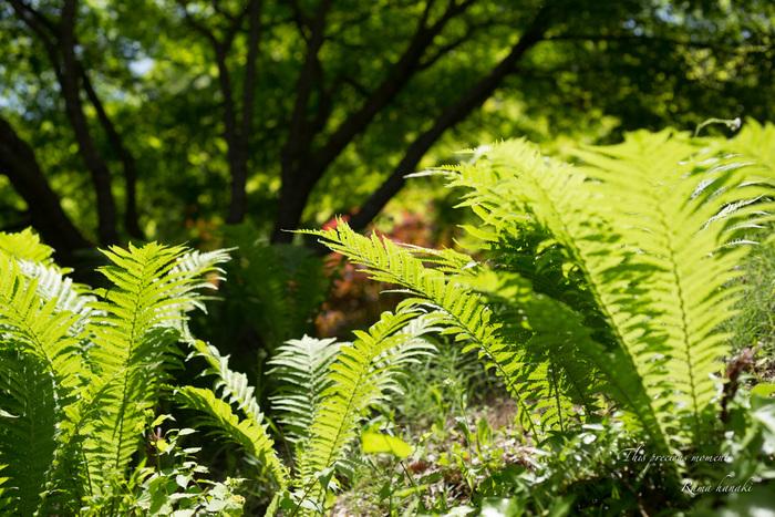 五月新緑輝く初夏到来_c0137403_1204625.jpg