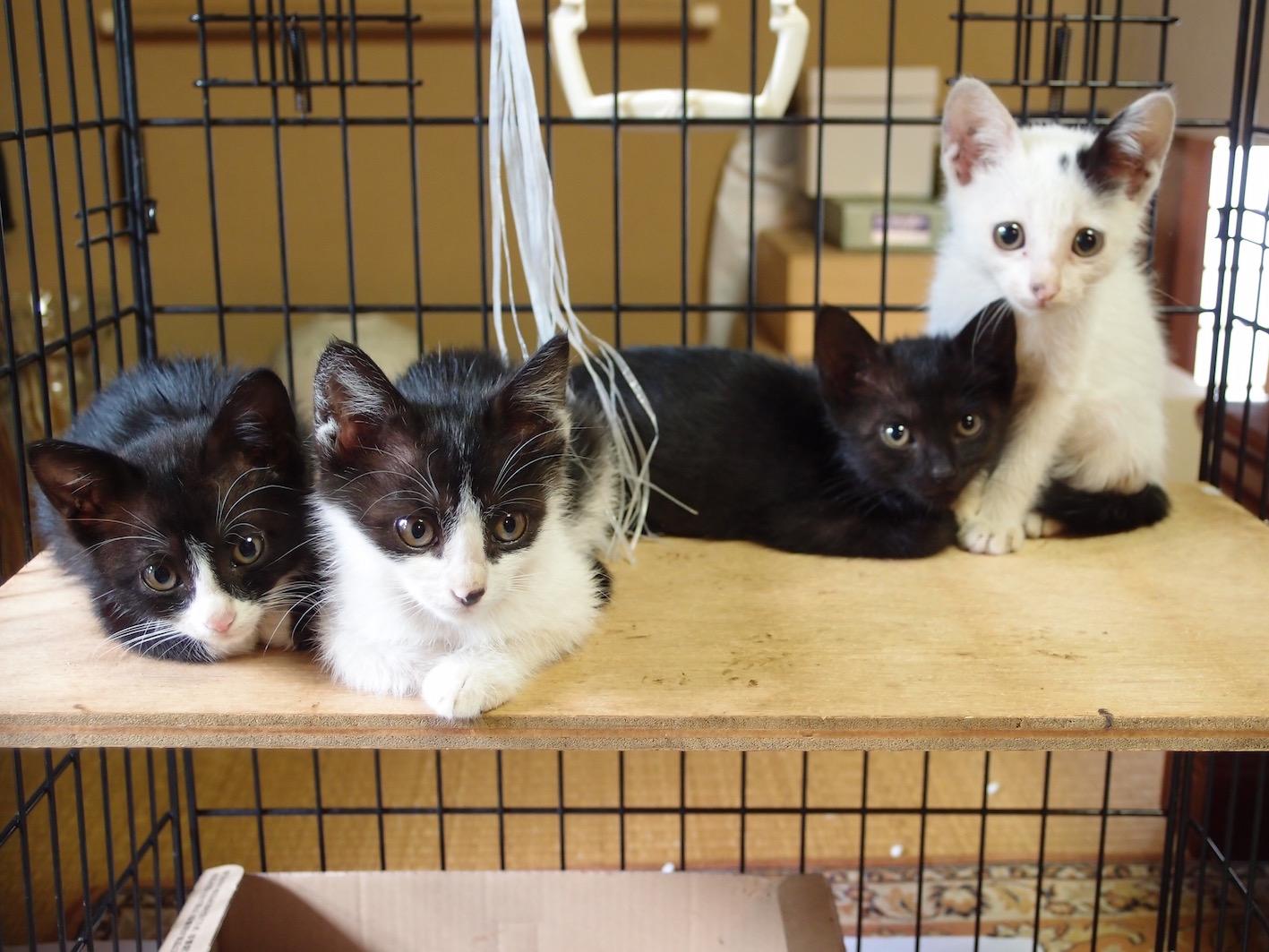 子猫の里親さんを募集しています_f0085219_21184535.jpg