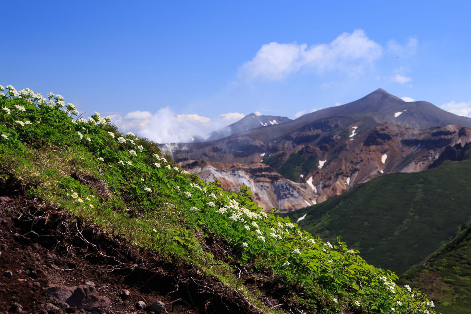 富良野岳 2015.7.6 後編_b0243727_2121334.jpg
