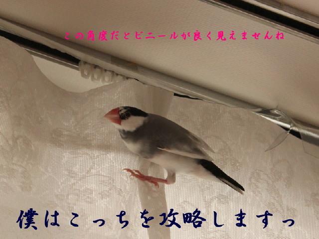c0365734_20133717.jpg