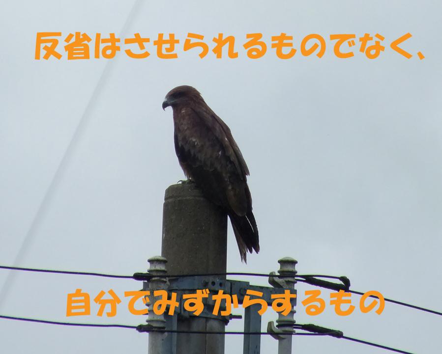 c0306635_1813989.jpg