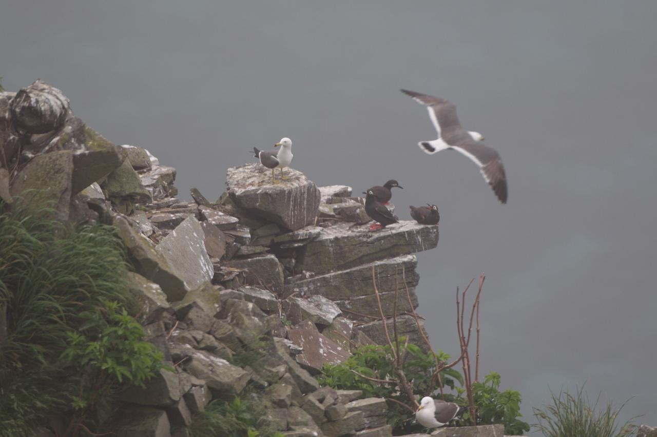 ケイマフリ  北海道旅行その7  赤岩展望台から_a0052080_11081830.jpg