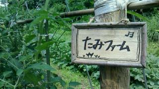 畑しごと ④_d0191211_9402317.jpg