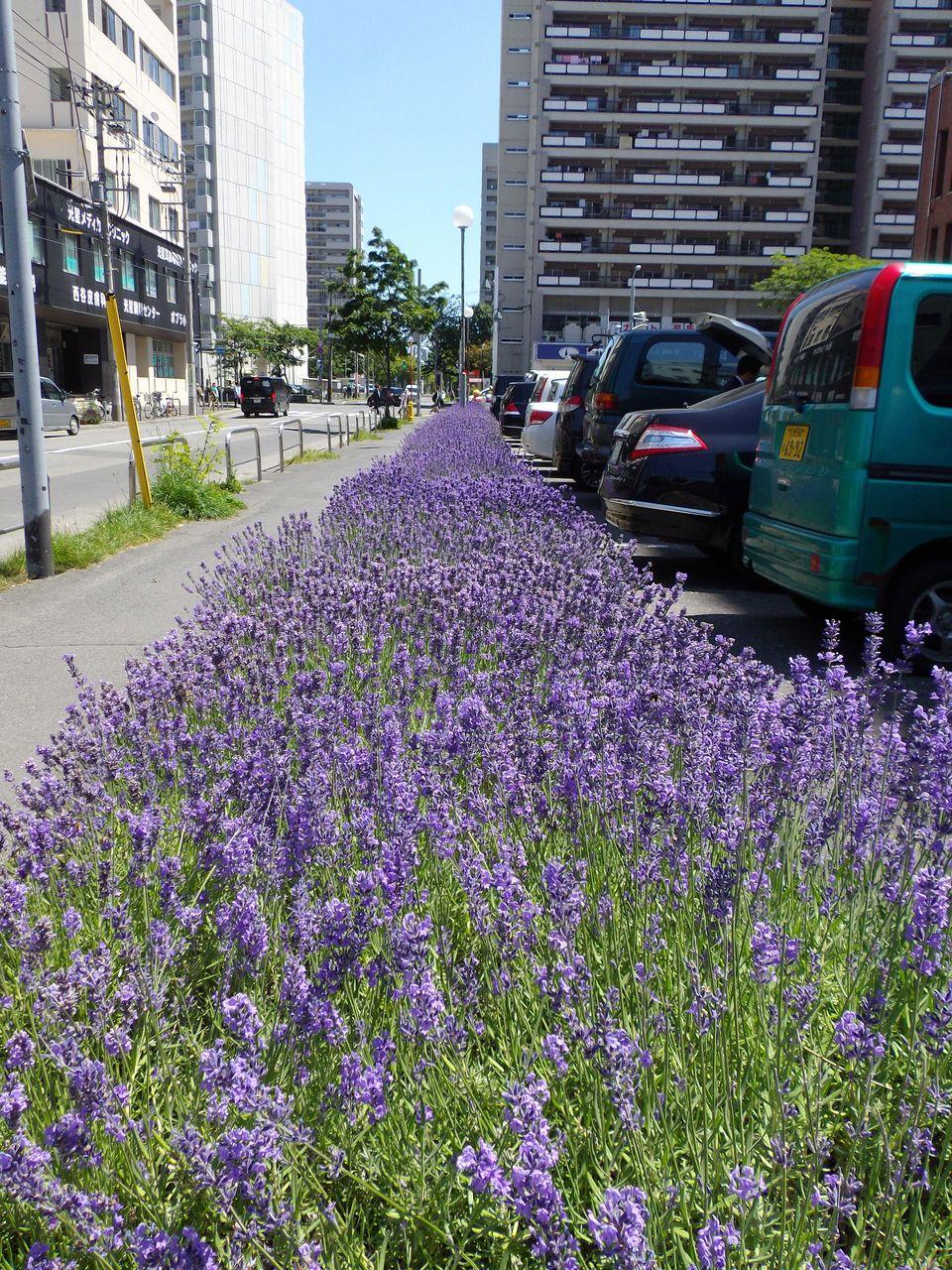 本当の夏が来た (by 渡辺美里)_c0025115_1925718.jpg