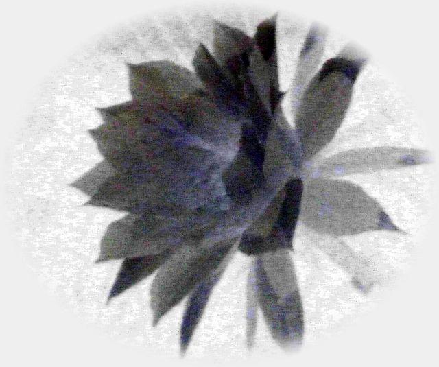 c0076218_20111590.jpg