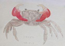 『蟹 の スケッチ』_a0083553_823779.jpg