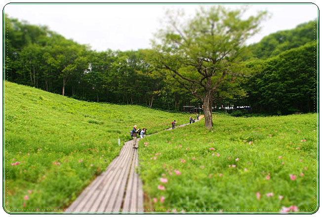 南会津・・・高清水自然公園 ひめさゆり群生地(1)_b0053765_19443966.jpg