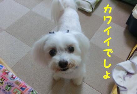 b0193480_15461253.jpg