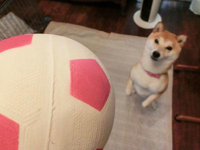 【柴犬ゆめちゃん】3歳になりました♪_f0062790_16241801.jpg
