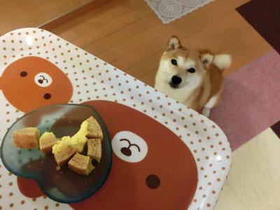 【柴犬ゆめちゃん】3歳になりました♪_f0062790_16321460.jpg