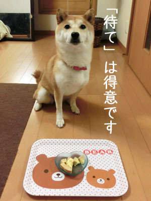 【柴犬ゆめちゃん】3歳になりました♪_f0062790_16325266.jpg
