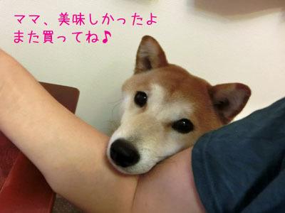 【柴犬ゆめちゃん】3歳になりました♪_f0062790_16360966.jpg