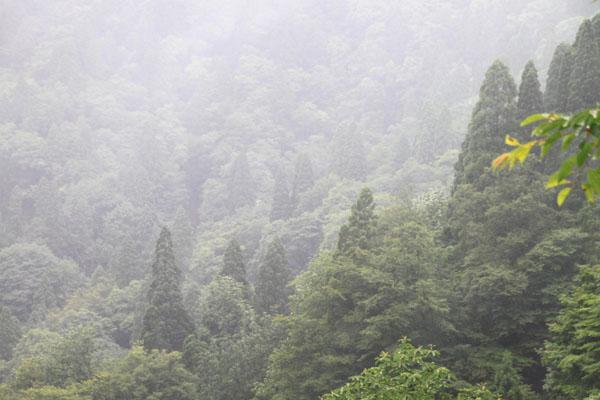 北山で霧が晴れた_e0048413_20312274.jpg