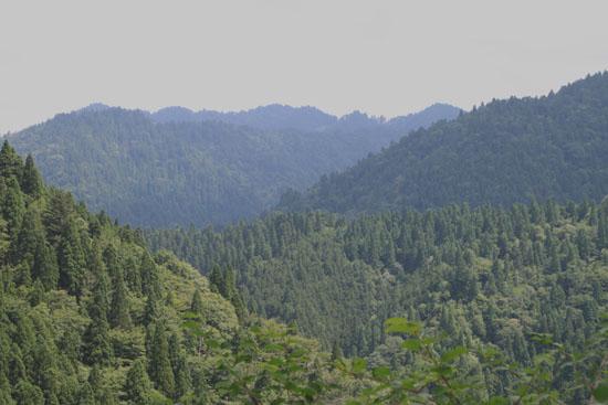 北山で霧が晴れた_e0048413_20315361.jpg