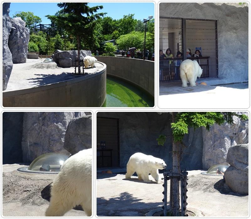 旭山動物園バスツアー_b0236665_05050218.jpg