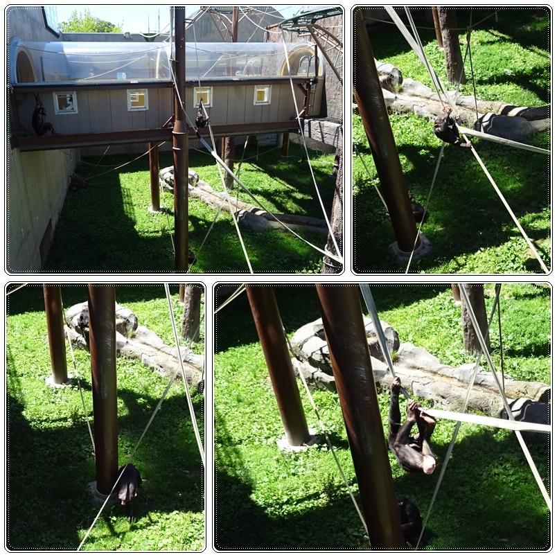 旭山動物園バスツアー_b0236665_05144405.jpg