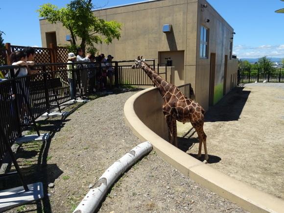 旭山動物園バスツアー_b0236665_05174742.jpg