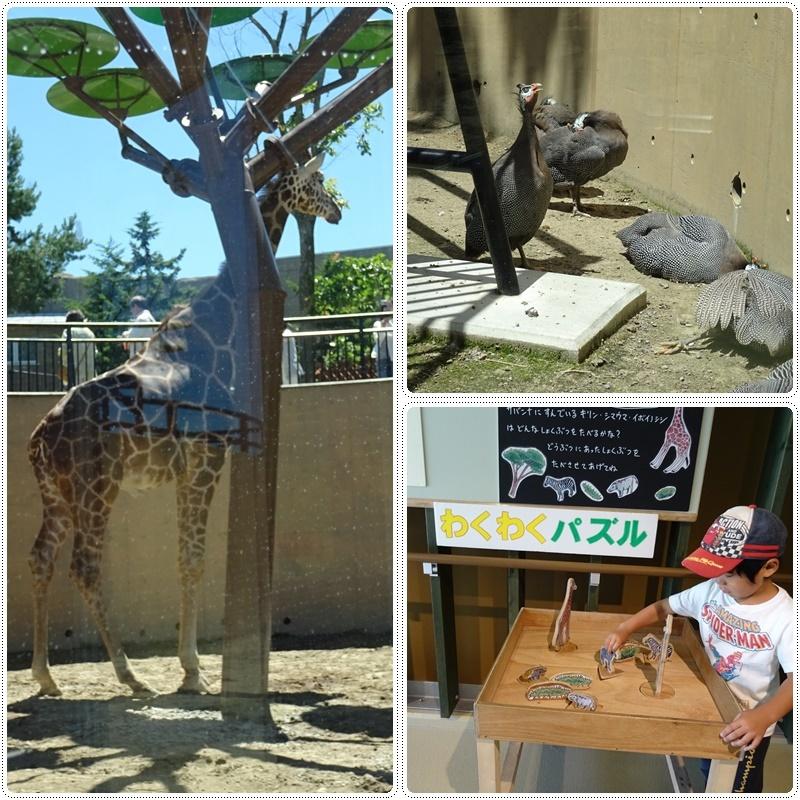 旭山動物園バスツアー_b0236665_05231121.jpg