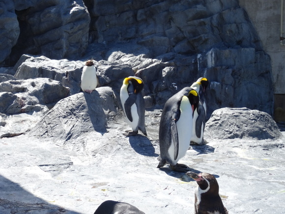 旭山動物園バスツアー_b0236665_05275767.jpg
