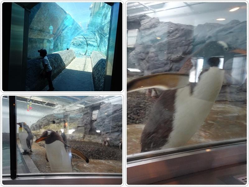 旭山動物園バスツアー_b0236665_05320102.jpg