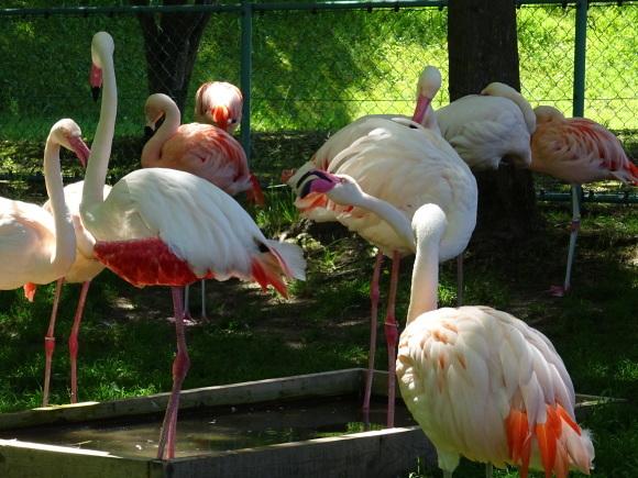旭山動物園バスツアー_b0236665_05342632.jpg