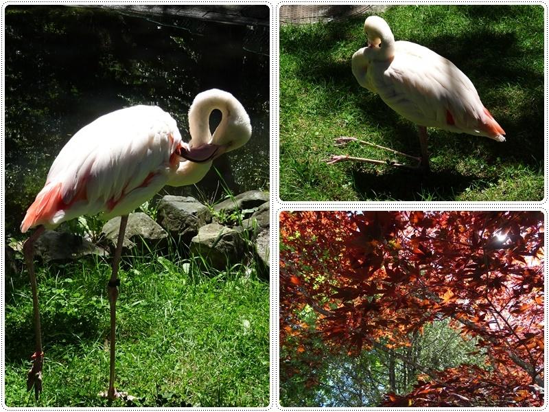 旭山動物園バスツアー_b0236665_05372665.jpg