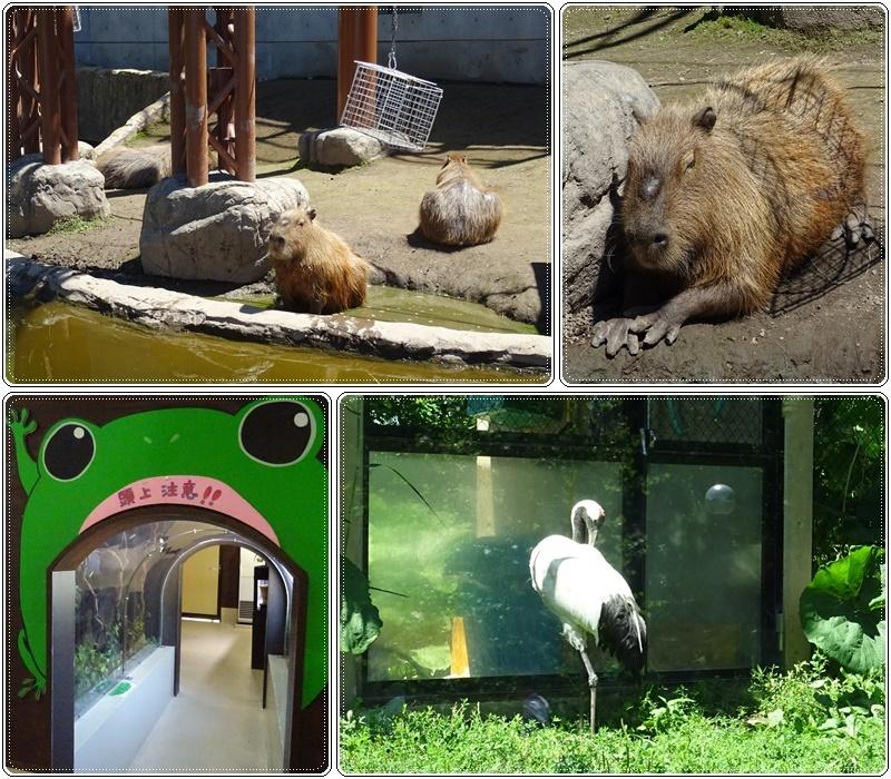 旭山動物園バスツアー_b0236665_05575655.jpg