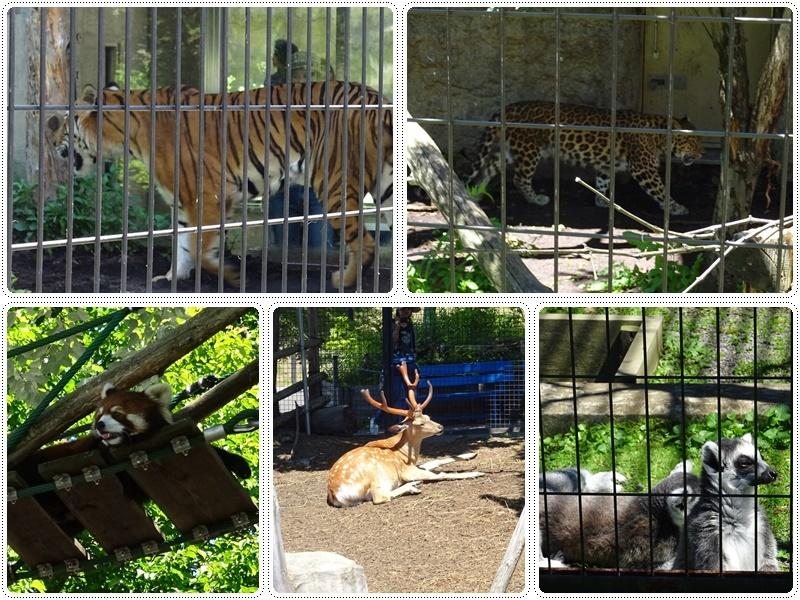 旭山動物園バスツアー_b0236665_06025090.jpg