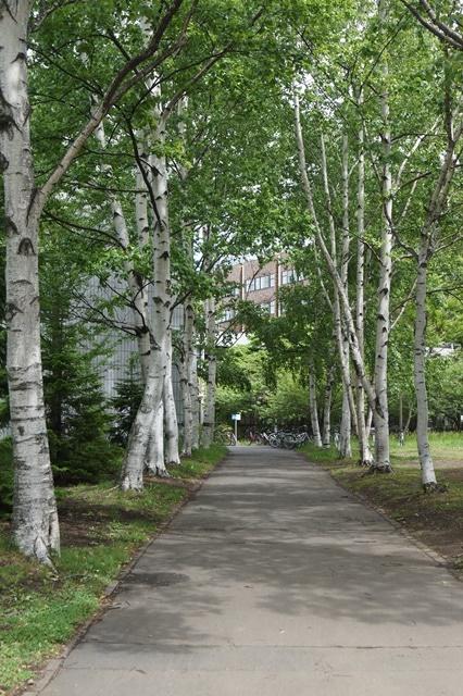 北海道大学は観光地でもあり、文化伝承の施設、大学を観光に生かせ!!_d0181492_1464294.jpg