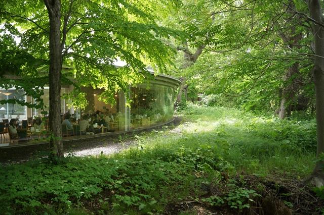 北海道大学は観光地でもあり、文化伝承の施設、大学を観光に生かせ!!_d0181492_1472391.jpg