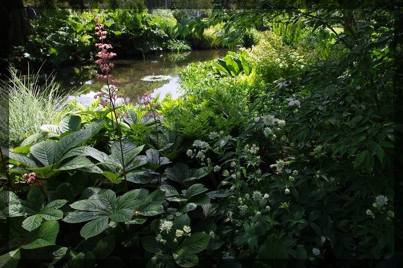 イギリス旅行記5 The Beth Chatto Gardens_e0136424_23025451.jpg