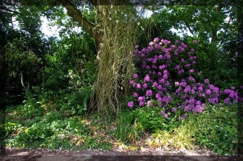 イギリス旅行記5 The Beth Chatto Gardens_e0136424_23030163.jpg