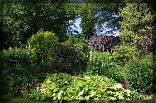 イギリス旅行記5 The Beth Chatto Gardens_e0136424_23030397.jpg