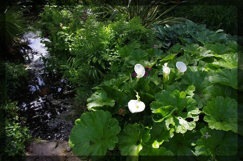 イギリス旅行記5 The Beth Chatto Gardens_e0136424_23031580.jpg
