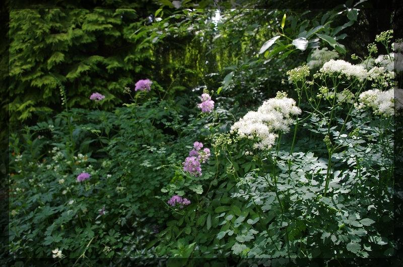 イギリス旅行記5 The Beth Chatto Gardens_e0136424_23031726.jpg