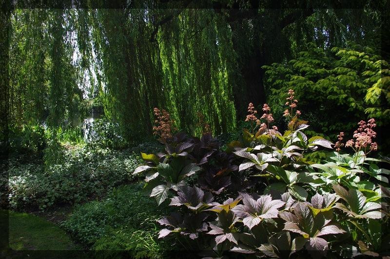 イギリス旅行記5 The Beth Chatto Gardens_e0136424_23032214.jpg