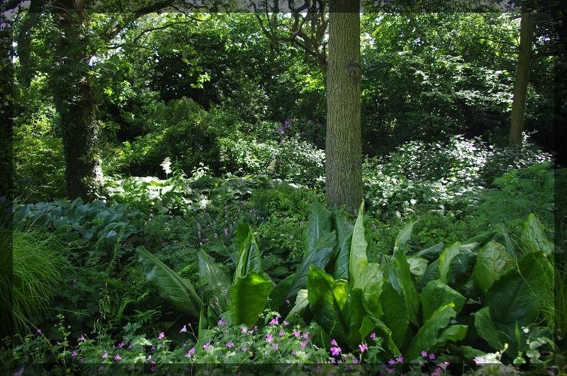 イギリス旅行記5 The Beth Chatto Gardens_e0136424_23032513.jpg